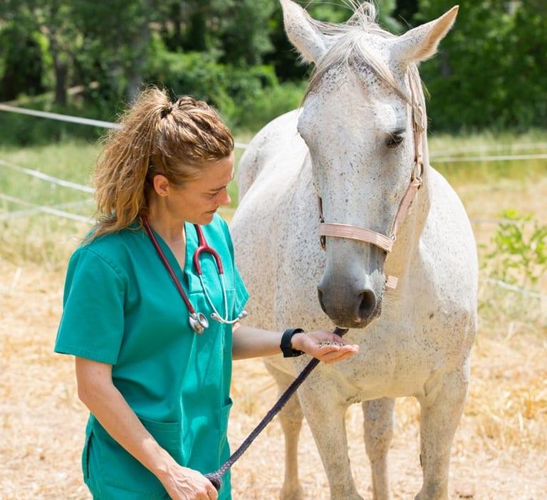 horse-vet-fbt